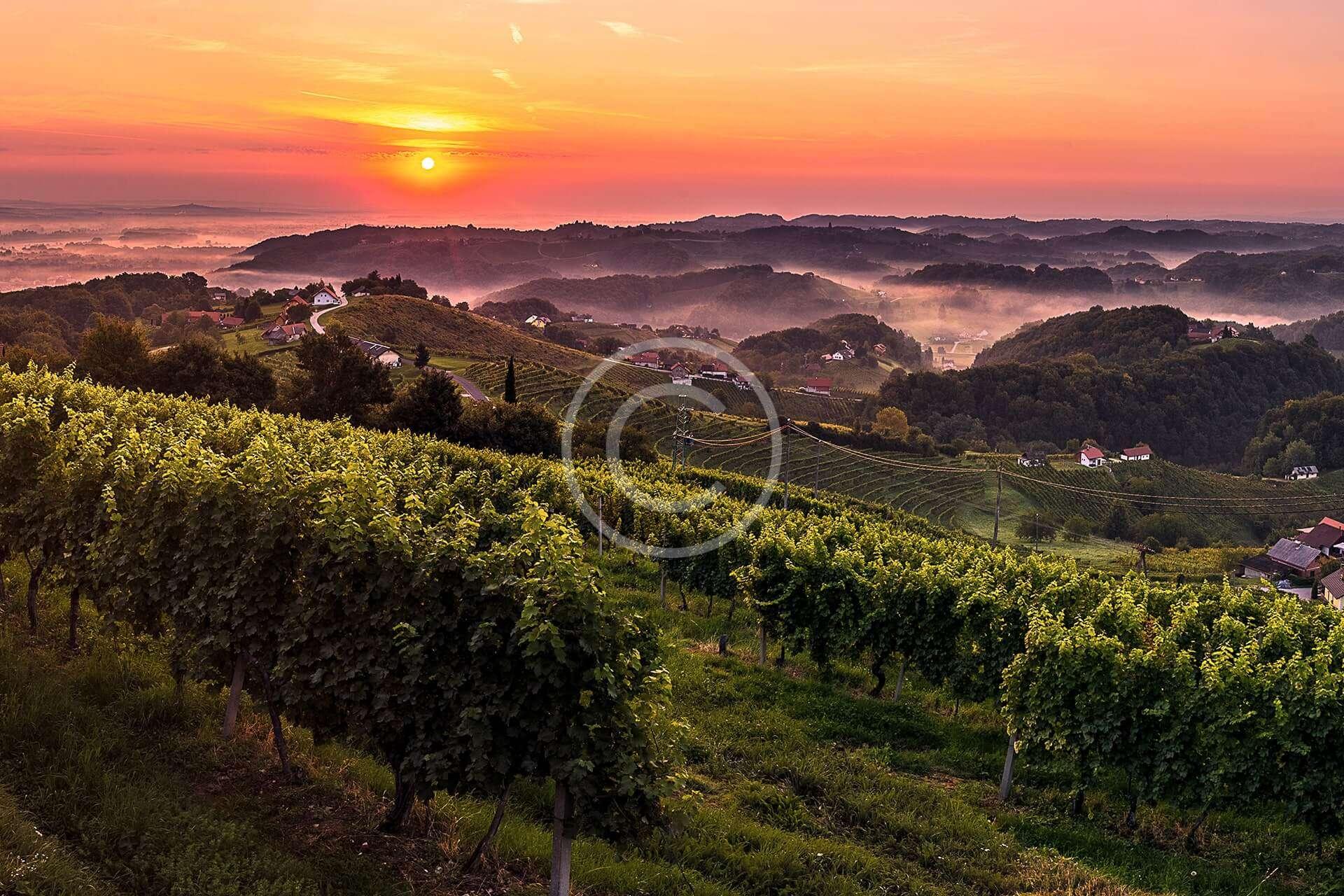 South Vineyards